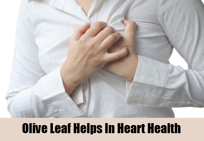 Olive Leaf Helps In Heart Health