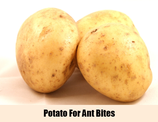 Potato For Ant Bites