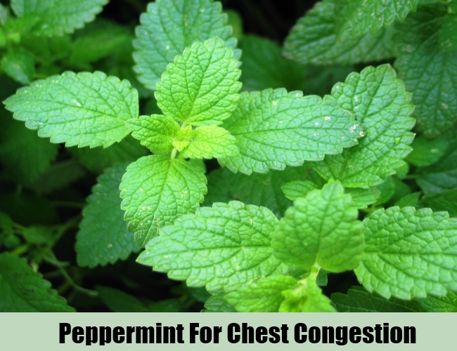 Peppermint For Chest Congestion