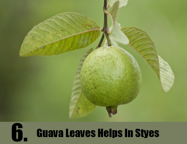 Guava Leaves Helps In Styes