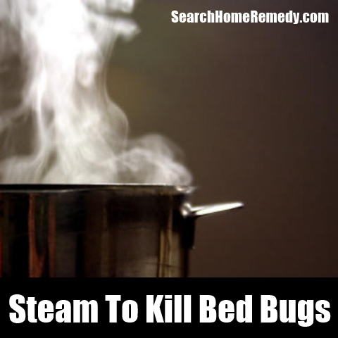 What Is The Best Way To Kill Bed Bugs 28 Images Great Popular Best Way To Kill Bed Bugs