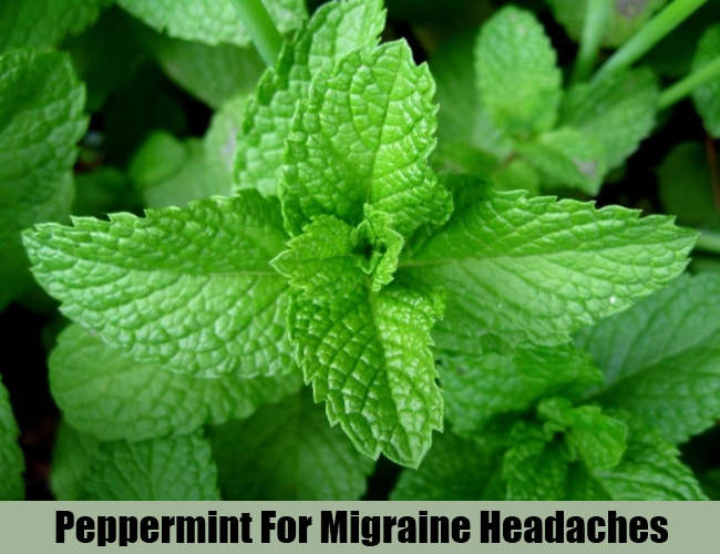 Peppermint For Migraine Headaches