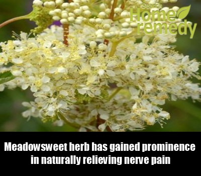 Meadowsweet Herb Tea Meadowsweet Herb Uses Side Effects