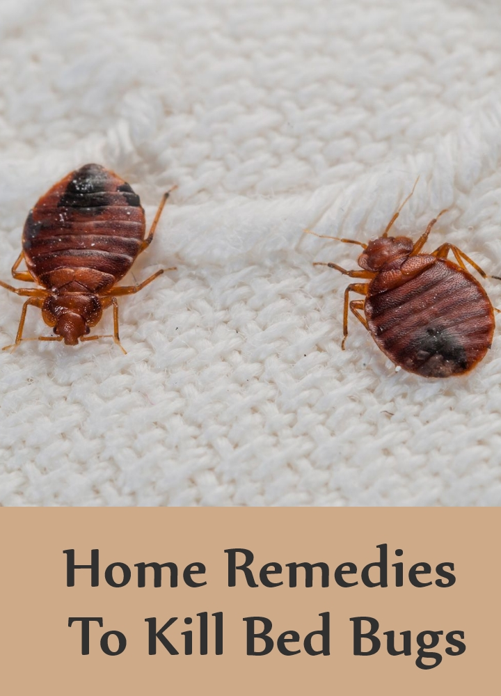 Dryer Heat To Kill Bed Bugs
